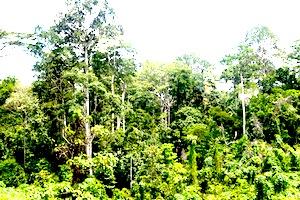 hutan di Yogyakarta