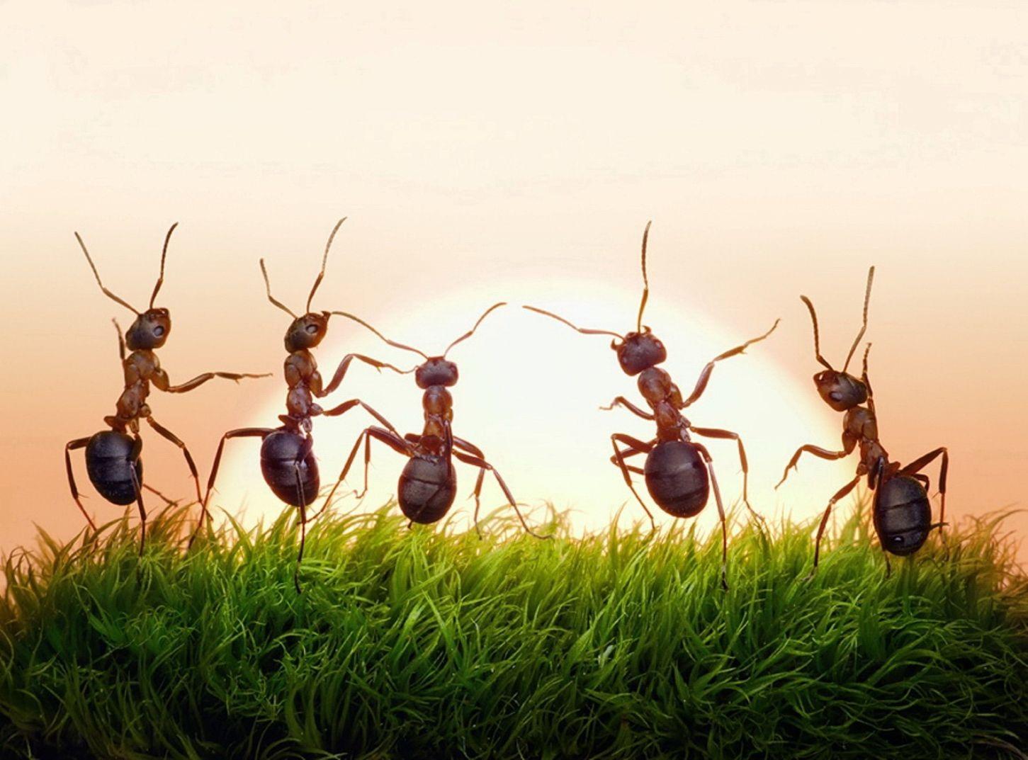 Прикольные картинки муравьи, днем рождения