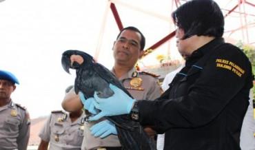 spesies burung di Indonesia