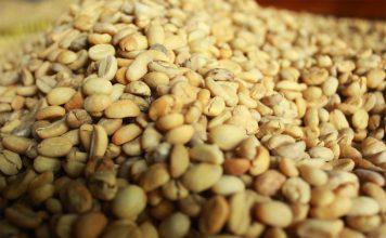 Volatilitas harga kopi