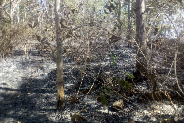 Kebakaran lahan minggu