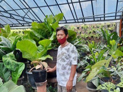 tanaman hias Kotagede