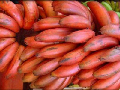 manfaat pisang merah