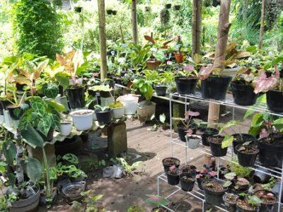 Puspito Garden